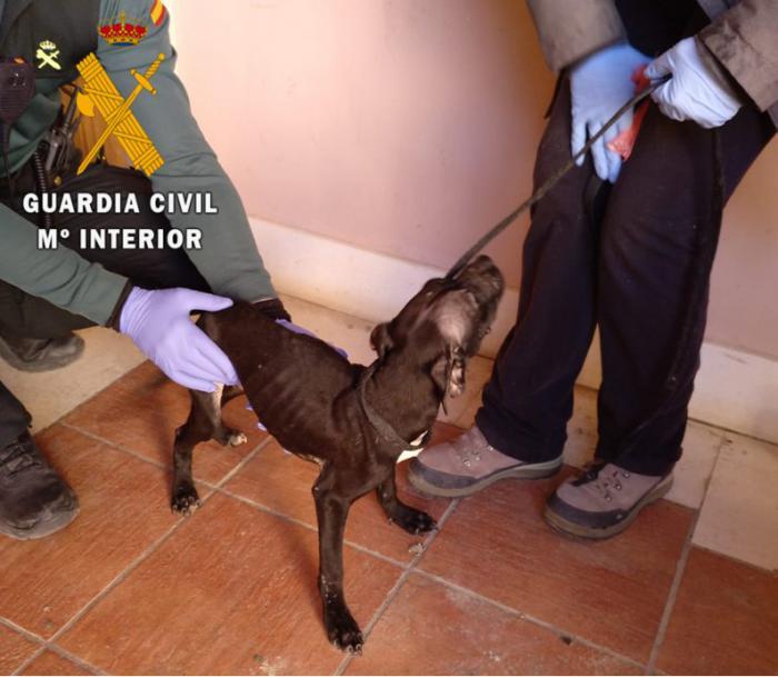 La Guardia Civil ha investigado a una persona por un delito de maltrato animal con resultado de muerte