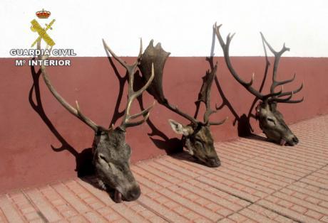 La Guardia Civil detiene a cuatro personas por furtivismo en una finca de la localidad de Almadén