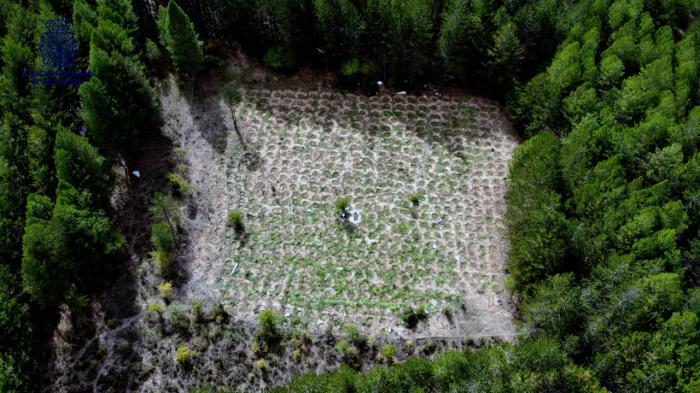 La Policía Nacional desarticula un grupo dedicado al cultivo y distribución de marihuana en la Serranía de Cuenca