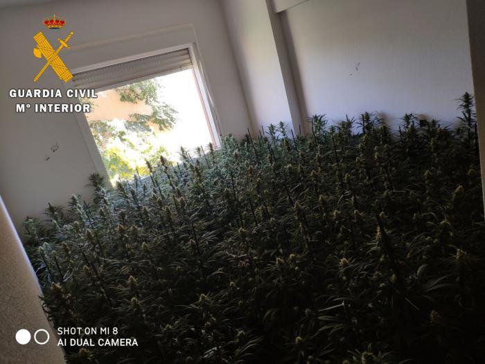 La Guardia Civil ha detenido a 6 personas en la meseta de Ocaña por delitos de cultivo o elaboración de estupefacientes