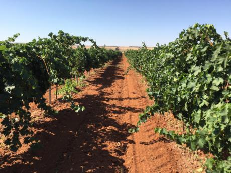 """UPA: """"No podemos permitir que más viticultores se vayan del sector"""""""