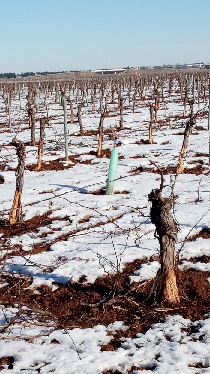 Se busca el apoyo de las instituciones para solucionar el problema de los desplazamientos y los daños provocados por la nieve a los agricultores