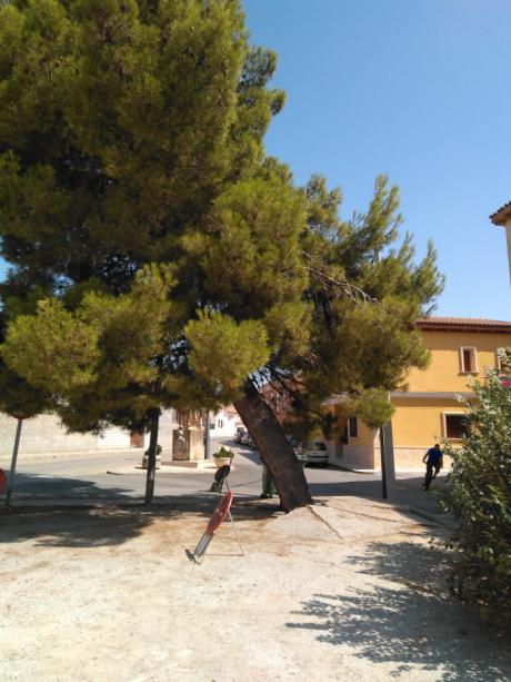 El Ayuntamiento de Tarancón talará por cuestiones de seguridad un ejemplar de pino carrasco