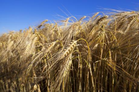 Perspectivas halagüeñas en la campaña del cereal