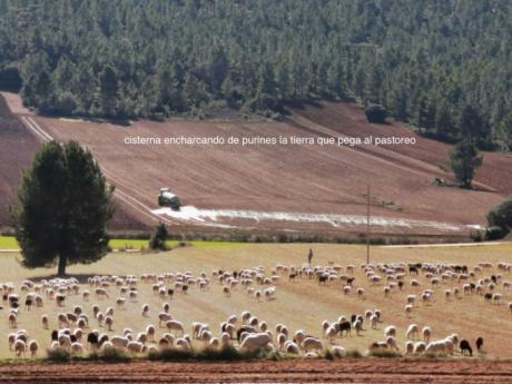 Pueblos Vivos Cuenca sigue esperando una respuesta de la Diputación para que apoye a los municipios contra la ganadería industrial