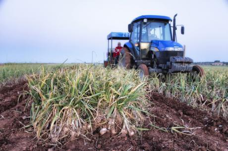 CCOO denuncia las condiciones de las trabajadoras del sector del ajo