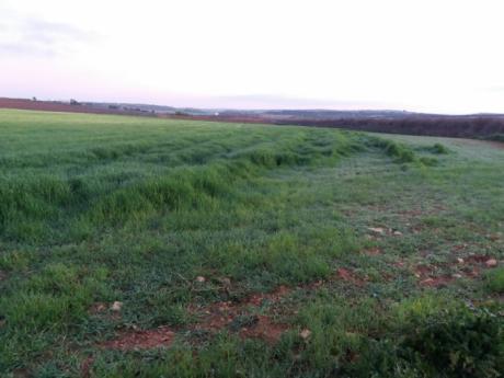ASAJA pide medidas especiales ante el incremento de conejos en las explotaciones agrarias
