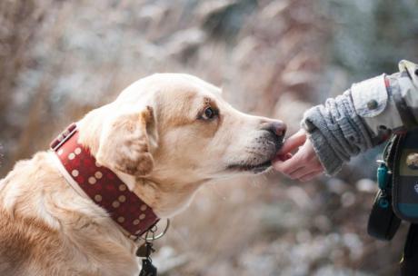 Se abren dos expedientes sancionadores a propietarios de perros peligrosos que los dejaron sueltos