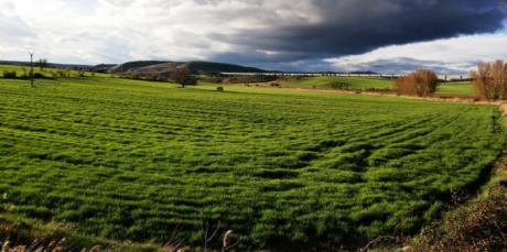 ASAJA vaticina una campaña de cereales inferior a la de los ultimos años