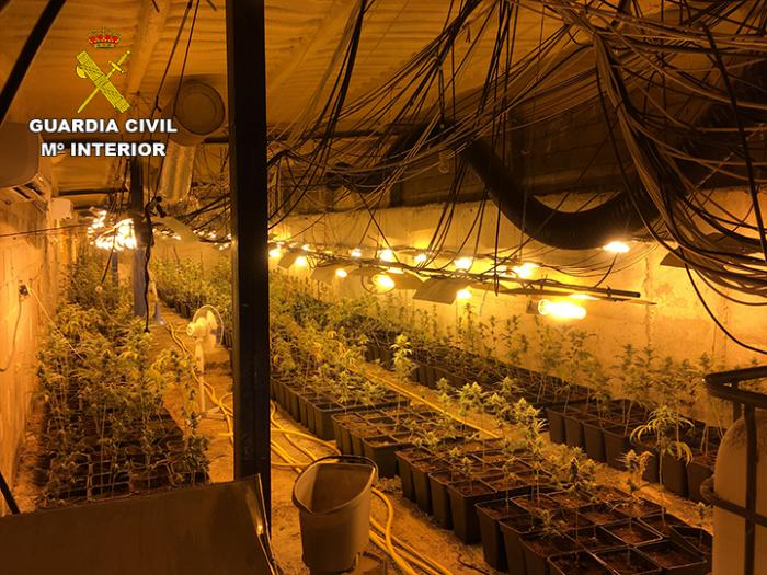 Incautadas 2.239 plantas de Marihuana