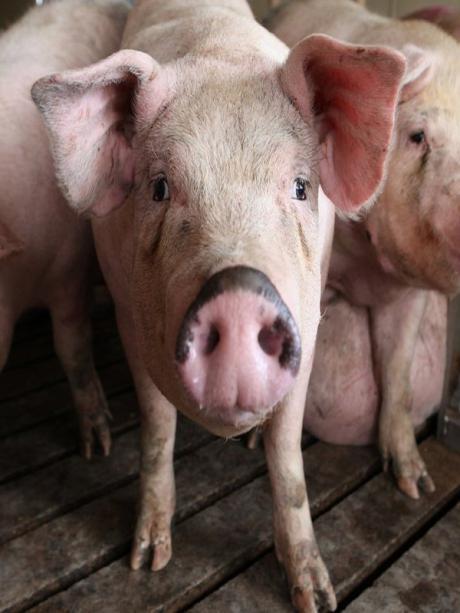 La Autorización de Impacto Ambiental de la granja porcina de Huerta de la Obispalía fue elaborada y publicada por el Gobierno de Cospedal