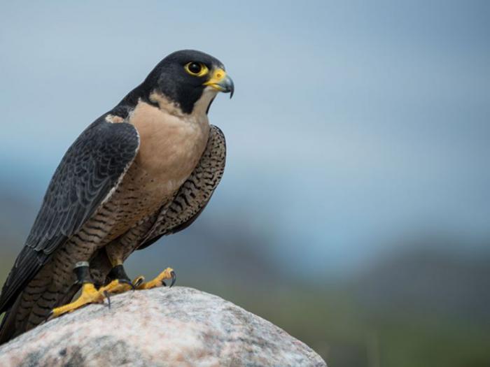 El Gobierno de Castilla La Mancha reforzará programa preservación de aves