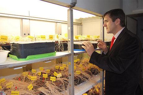 El proyecto Crocusbank avanza en el potencial del azafrán y especies afines para la producción de bioplaguicidas