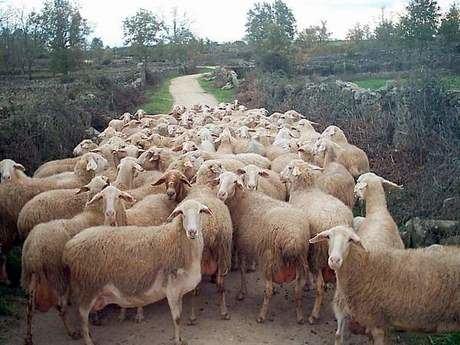 Las sectoriales ganaderas de ASAJA deciden convocar movilizaciones en defensa de los productores