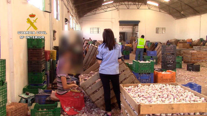 Guardia Civil y Policía de Rumania auxilian a 59 trabajadores en condiciones laborales precarias durante la campaña de recolección del ajo