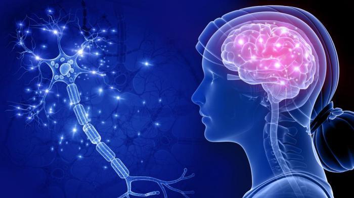 Investigadores de la UCLM concluyen que hay zonas del sistema olfativo comunes en el desarrollo de las enfermedades de Alzheimer y Parkinson