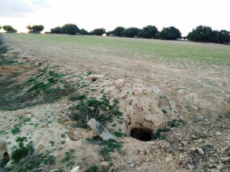 ASAJA exige a Agricultura que no renueve el decreto que aprueba el plan general del conejo de monte