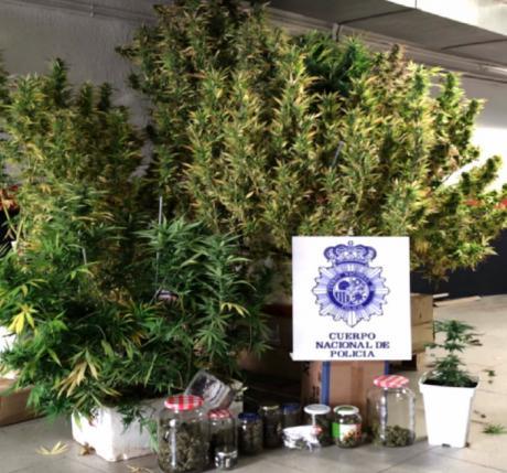 Detenida una persona que cultivaba marihuana en las zonas comunitarias de un edificio de la capital