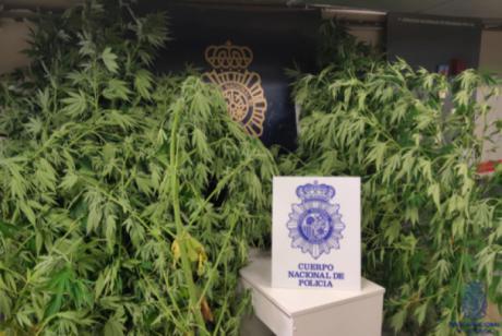 Detenida una persona por tráfico de drogas en Palomera