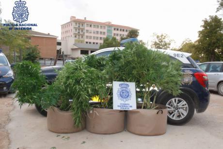 Detenido en la capital un vecino que cultivaba varias plantas de marihuana en la terraza de su casa