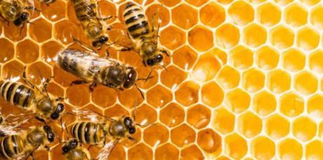 La producción de miel se dispara por la escasa contaminación durante el confinamiento