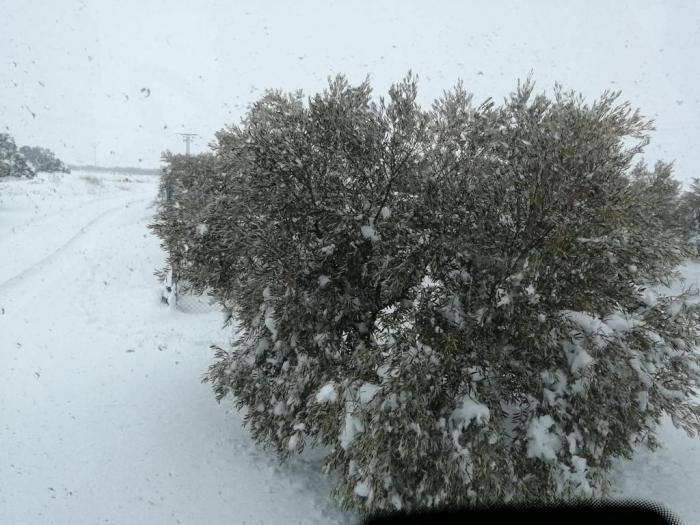 Preocupación entre los agricultores por los efectos del temporal