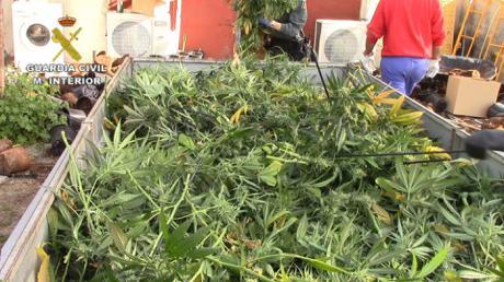 La Guardia Civil ha incautado más de 9.000 plantas de marihuana y efectos por un valor superior a los 300.000 euros
