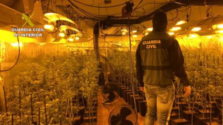 La Guardia Civil detiene en Toledo a 8 personas por cultivo y tráfico de marihuana