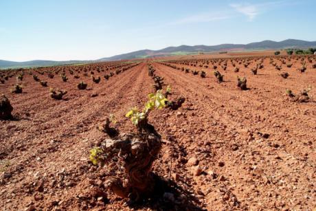 La Junta ha ingresado ya en las cuentas de los viticultores 8,5 millones de euros por reestructuración del viñedo en esta campaña