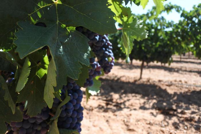 La Junta ha aprobado más de 46 millones de euros de ayudas para reestructuración de viñedo de las que se beneficiarán 2.066 agricultores