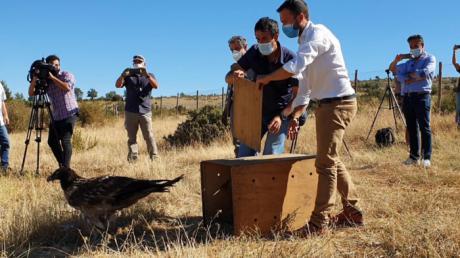 Se trabaja para reintroducir al quebrantahuesos en la Serranía de Cuenca y el Alto Tajo