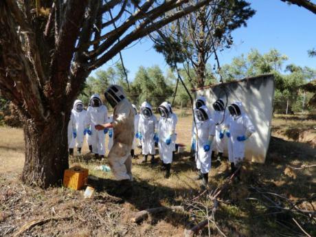 Efectivos del cuerpo de bomberos participan en el curso de intervención apícola para la retirada de enjambres de abejas en el entorno urbano