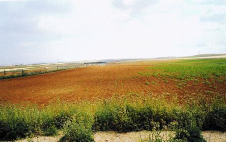 ASAJA celebra la setencia que condena a ADIF a indemnizar a unos agricultores por los daños causados por los conejos en las parcelas que tienen junto a la línea del AVE a su paso por Tarancón