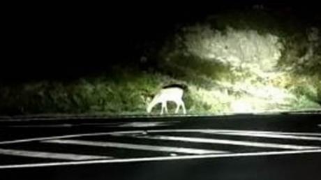 Los animales causan el doble de accidentes de tráfico este año en la provincia