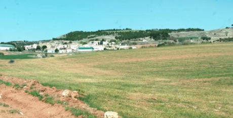 ASAJA Cuenca alerta de los efectos irreversibles de la sequía en el cereal si no llueve en unos días