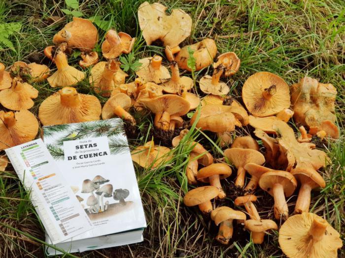 La UCLM publica la Guía de setas de la provincia de Cuenca